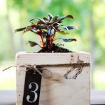 DIY Centerpiece ~ Mini Planter Boxes