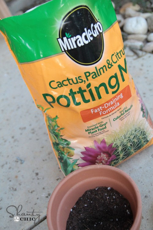 Potting Mix for Succulents